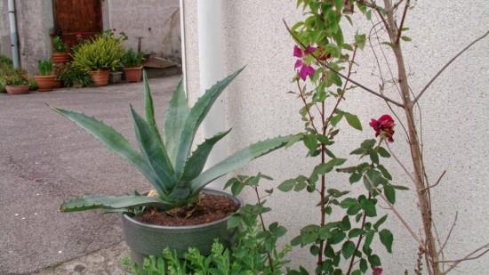 Cactus2015 (23)