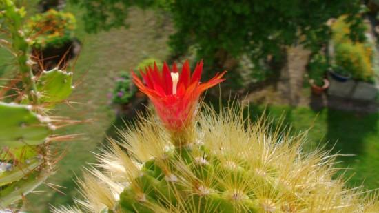 Cactus2013 (1)