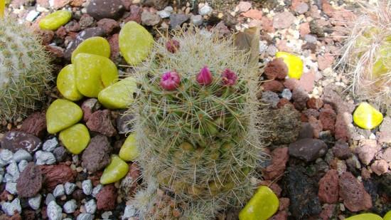 Cactus2013 (105)