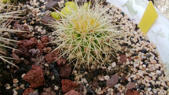Cactus2013 (107)