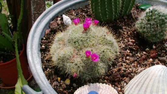 Cactus2013 (109)