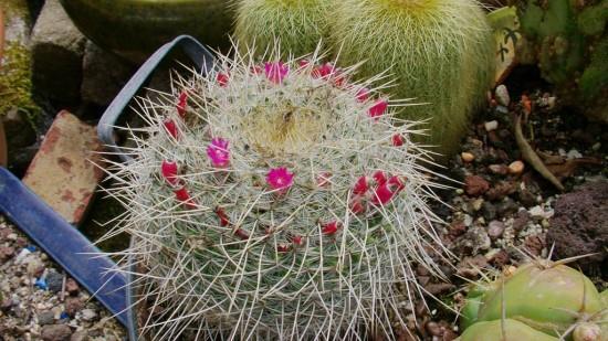 Cactus2013 (112)