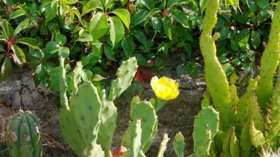 Cactus2013 (15)