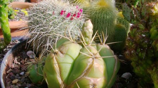 Cactus2013 (17)