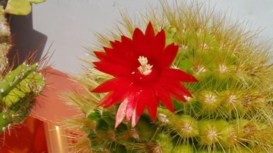 Cactus2013 (2)