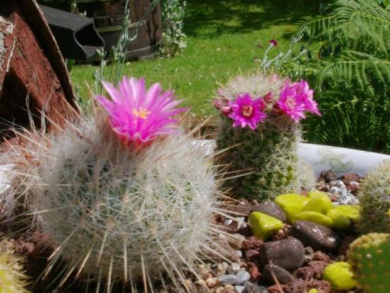 Cactus2013 (20)