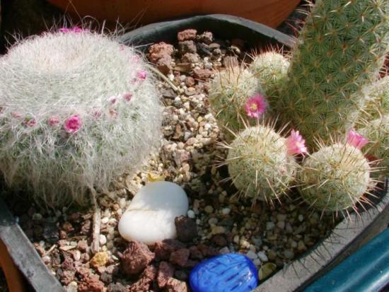 Cactus2013 (22)