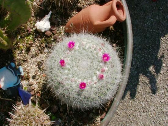 Cactus2013 (24)