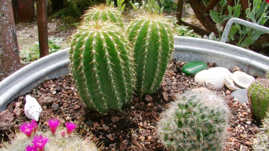 Cactus2013 (28)