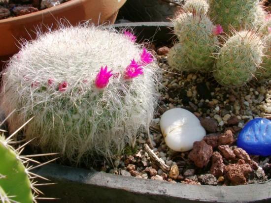 Cactus2013 (32)