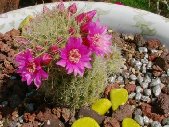 Cactus2013 (34)