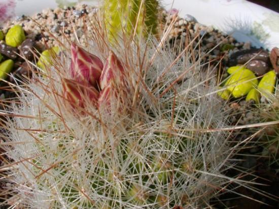 Cactus2013 (35)