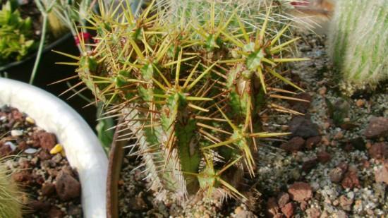 Cactus2013 (36)