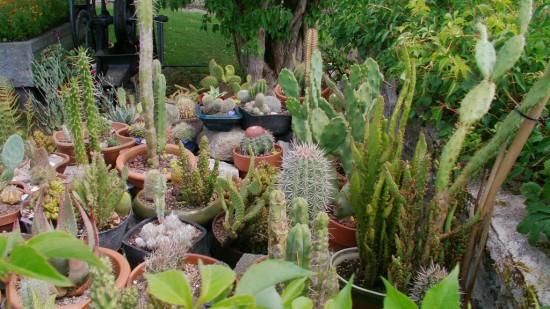 Cactus2013 (38)
