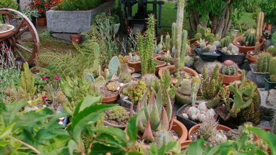 Cactus2013 (39)