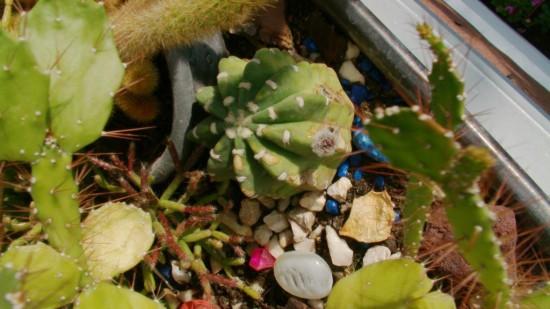 Cactus2013 (4)