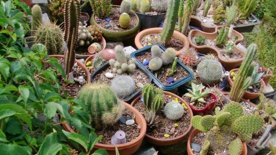 Cactus2013 (40)