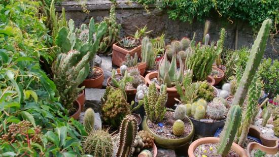 Cactus2013 (41)