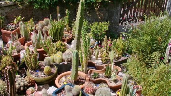 Cactus2013 (42)