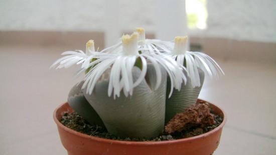 Cactus2013 (43)