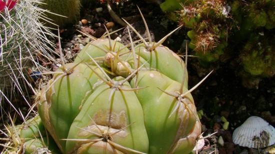 Cactus2013 (45)