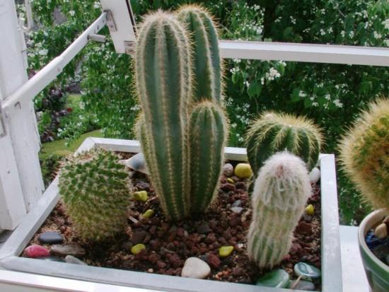 Cactus2013 (5)