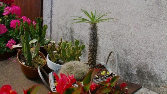 Cactus2013 (51)