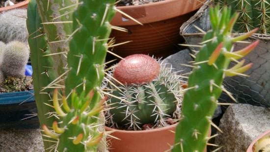Cactus2013 (54)