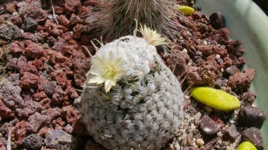 Cactus2013 (6)