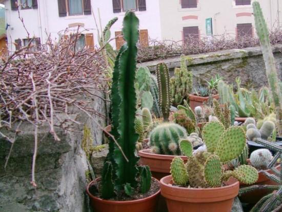 Cactus2013 (83)