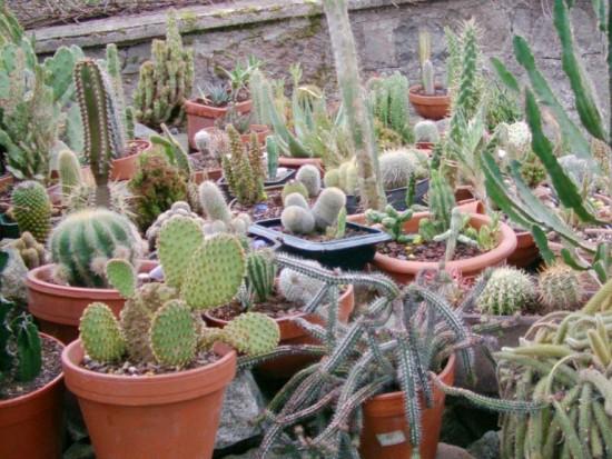 Cactus2013 (85)
