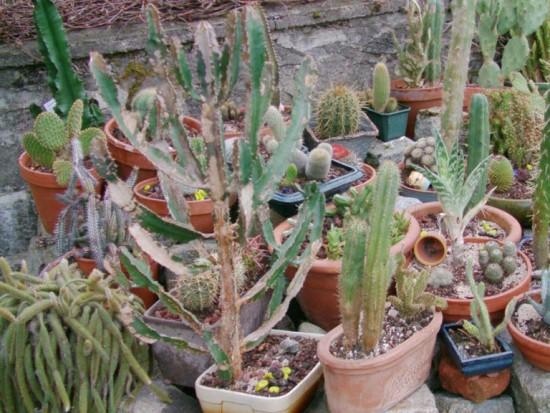 Cactus2013 (87)