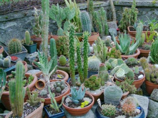 Cactus2013 (89)