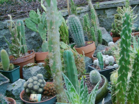 Cactus2013 (91)