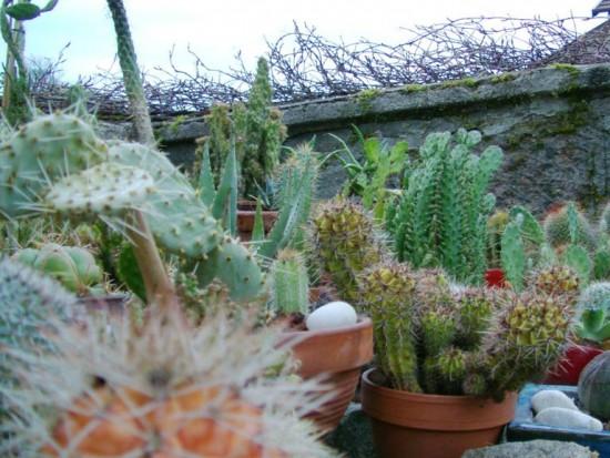 Cactus2013 (93)