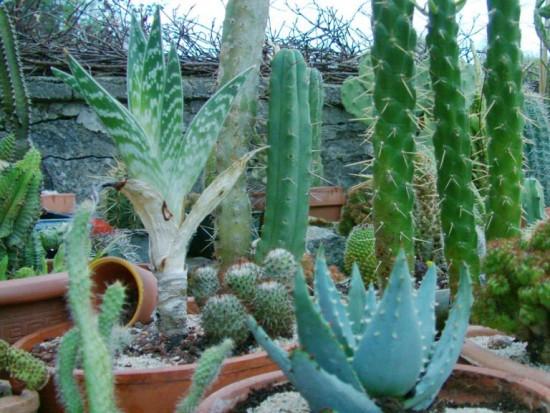 Cactus2013 (95)