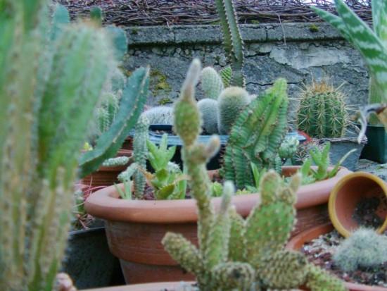 Cactus2013 (97)